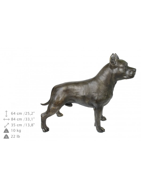 American Staffordshire Terrier - statue (resin) - 4691 - 41892