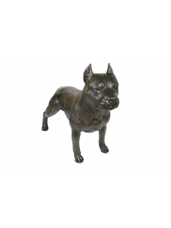 American Staffordshire Terrier - statue (resin) - 4691 - 41894