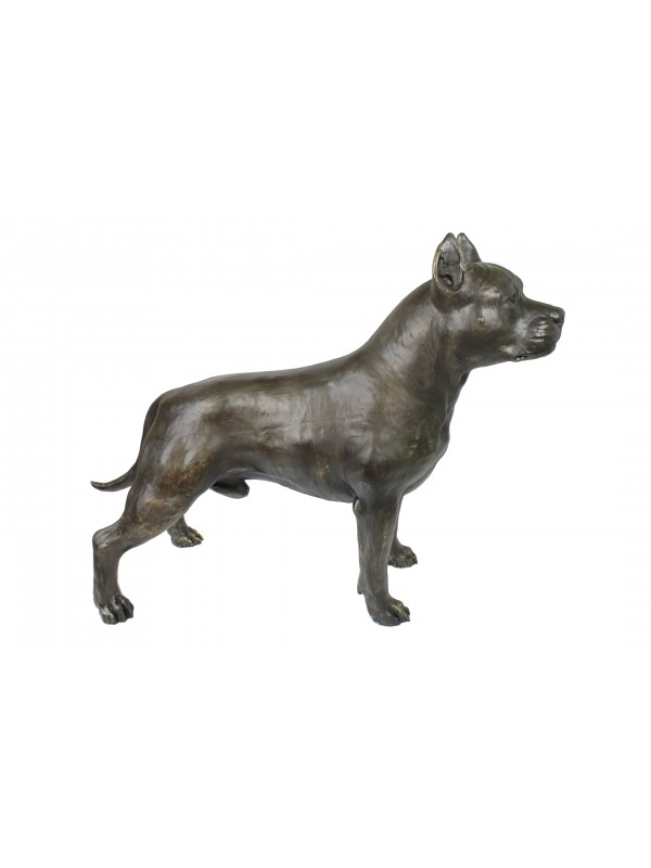 American Staffordshire Terrier - statue (resin) - 4691 - 41893