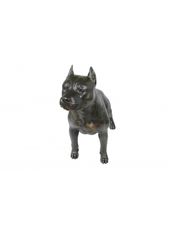 American Staffordshire Terrier - statue (resin) - 4691 - 41898